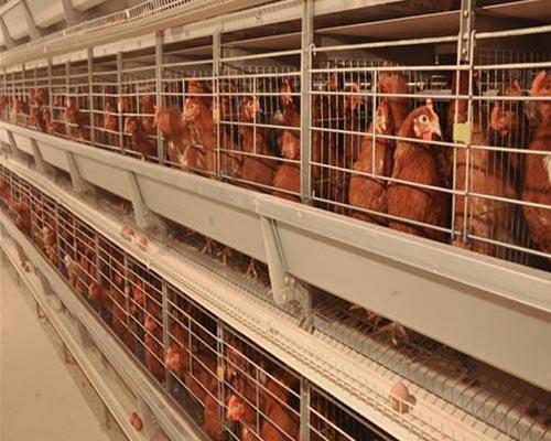 蛋鸡养殖设备